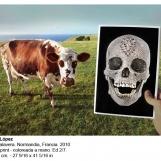 ml-2010-vaca-y-calavera-6420-pro-arte