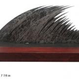 bs-tsunami-7895